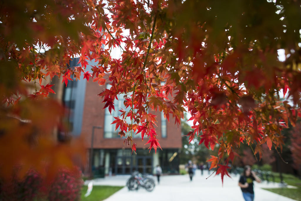 Red fall leaves on Fairfax Campus